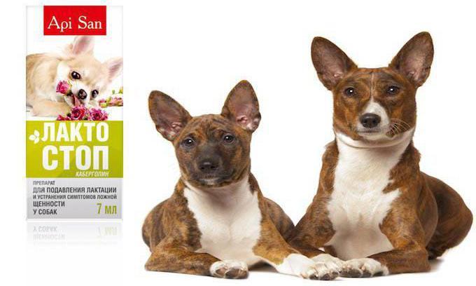 лактостоп для собак инструкция отзывы - фото 2