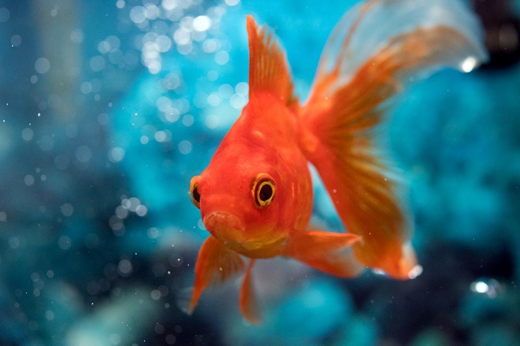 картинки на аву рыбки