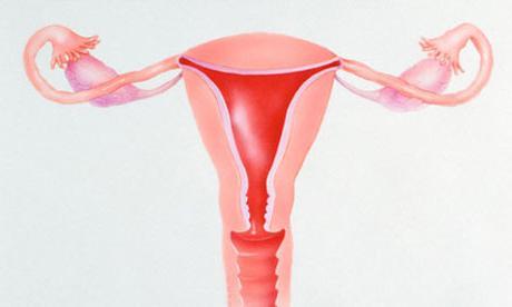 Вторичные и первичные половые признаки мужчин и женщин