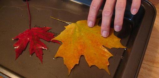 Листья в глицерине своими руками мастер класс 3
