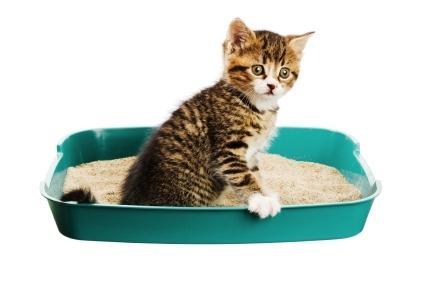 Запор у кішки лікування в домашніх умовах