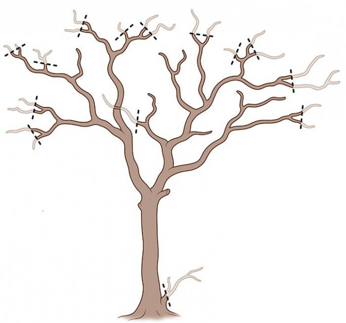Обрезка фруктовых деревьев осенью