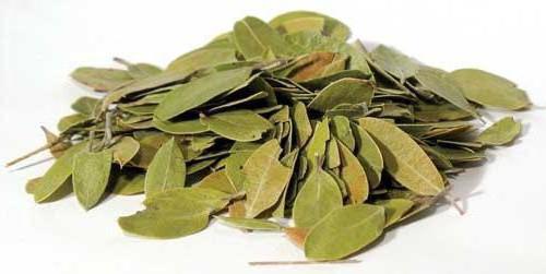 брусничный лист свойства