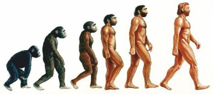 древние обезьяны