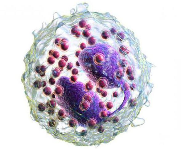 при аллергии повышены эритроциты в крови