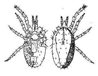 как бороться с паразитами народными средствами