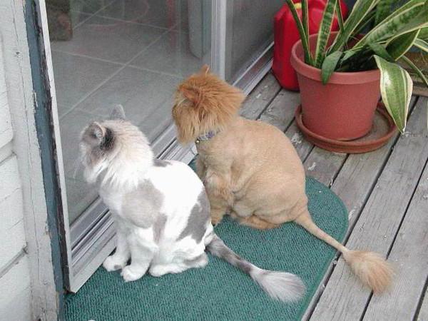 Как подстричь кота в домашних условиях самому 202