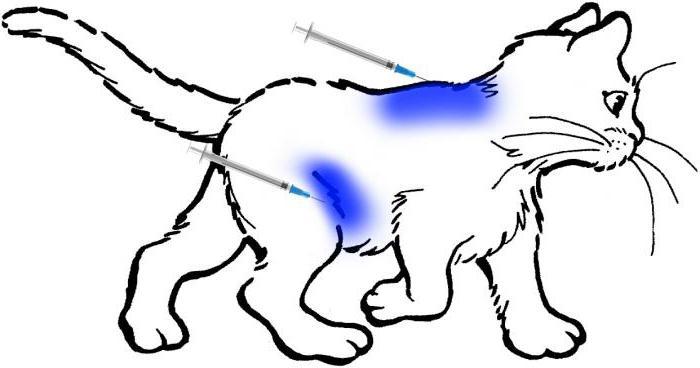 как сделать укол кошке в холку схема