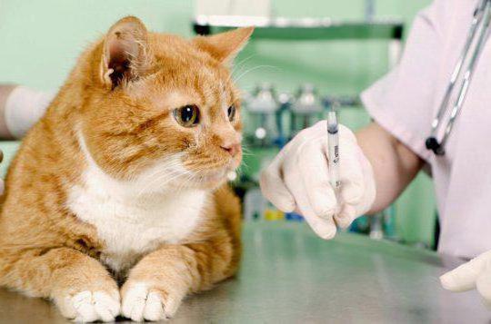 как делать укол кошке в холку инструкция