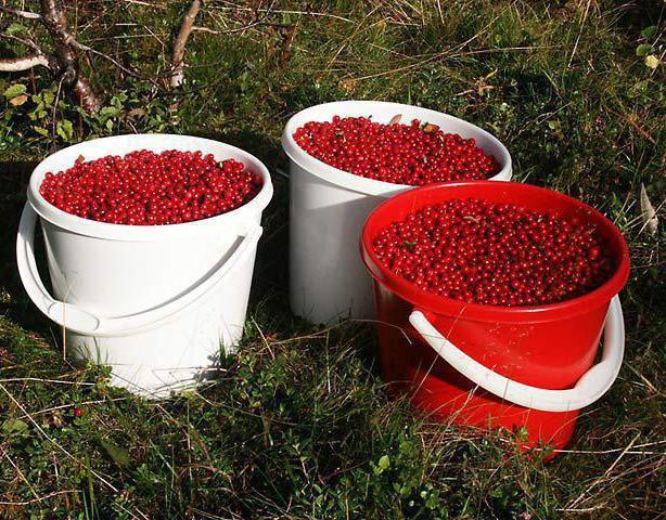 ягоды брусники давление повышают или понижают