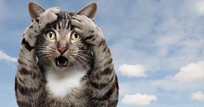 Чем можно заболеть от кота