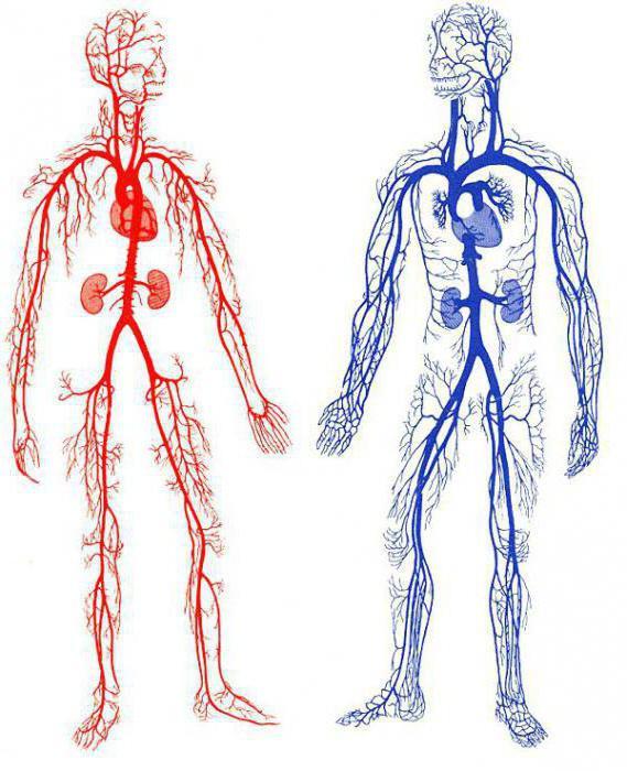 артериальное кровотечение первая помощь