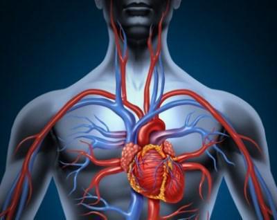 На груди стали сильно видны вены 1
