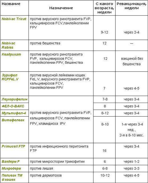вклады, модно ли делать прививки кошке поздк 12 недель коньков (кровля Браас