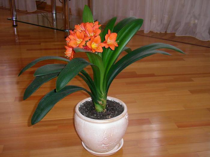 декоративно цветущие растения названия
