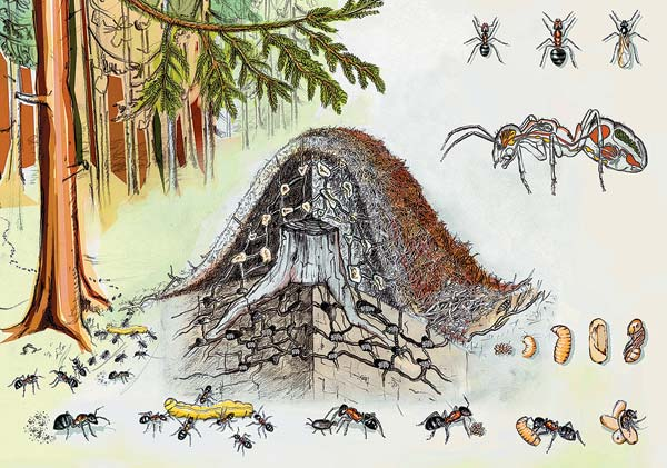 жизнь в муравейнике