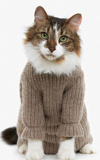 Вязаная одежда для кошки своими руками