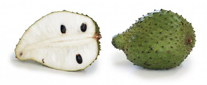 где растет фрукт гуанабана