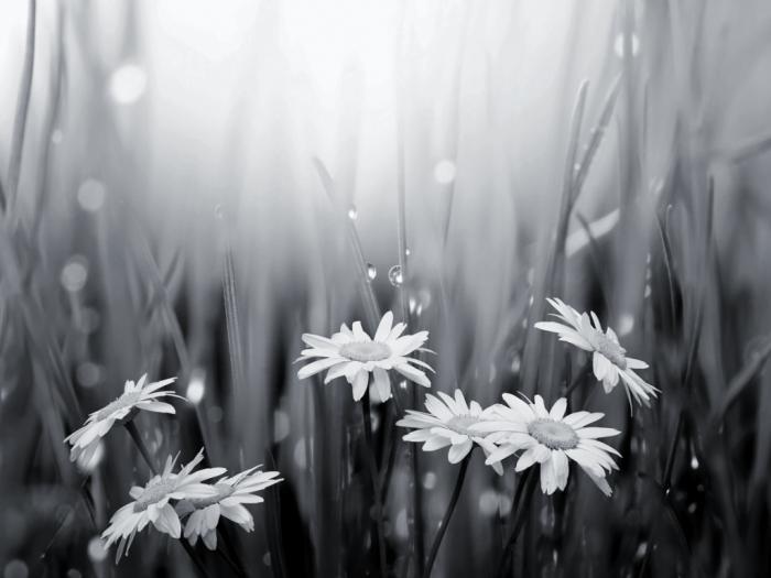 черно белые фотографии цветов