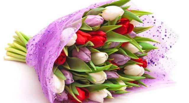 Камелия цена цветок 69