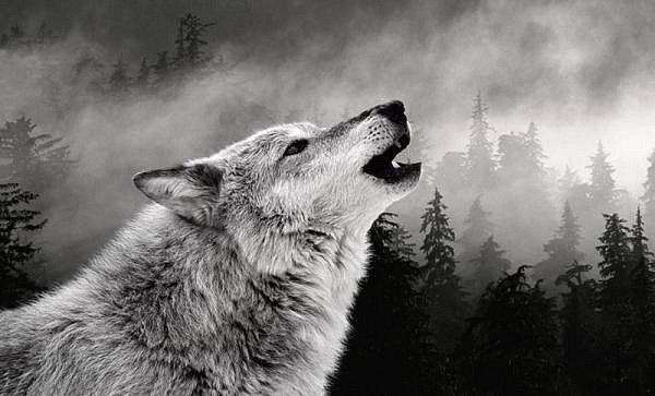 тотем волк значение знаки воет