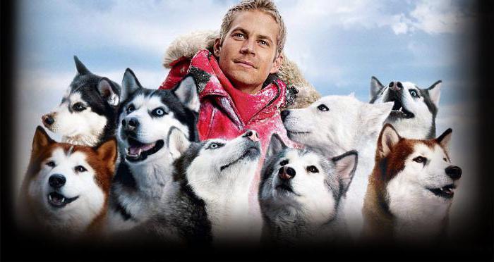 фото собак белый плен