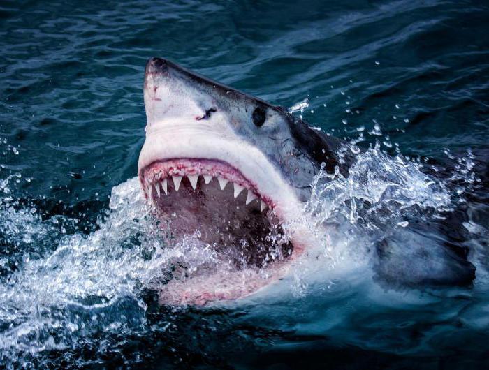 скачать игру про акул через торрент - фото 11