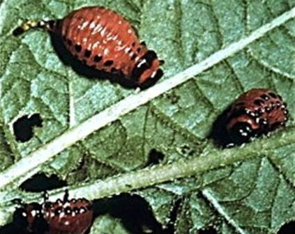 против паразитов в организме