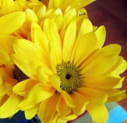 Цветы похожие на ромашки желтые