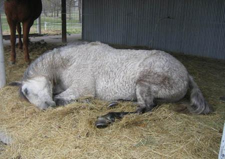 спящая лошадь фото