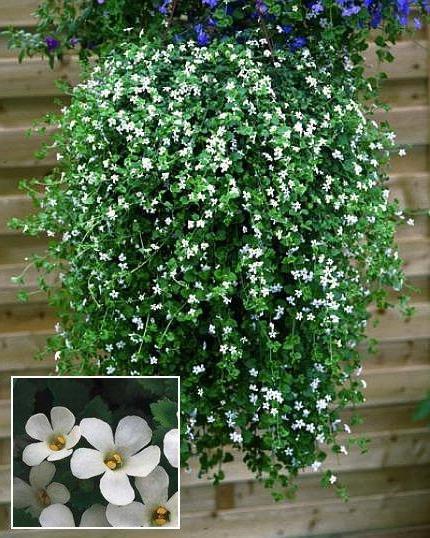 Бордюрные цветы и растения многолетники: фото в 9