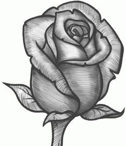 как правильно рисовать розы