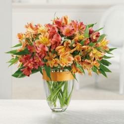 фото цветов альстромерия