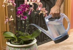 Видео орхидеи как поливать в домашних условиях