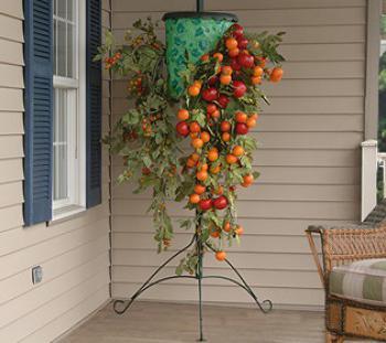 секреты выращивания помидоров