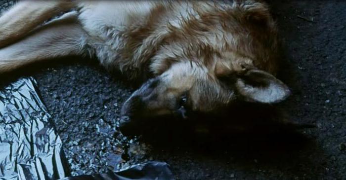 Многие люди также задаются вопросом, к чему снится собака в крови.