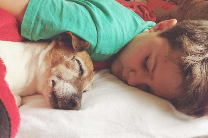 К чему снится убитая собака? Сонник расскажет!