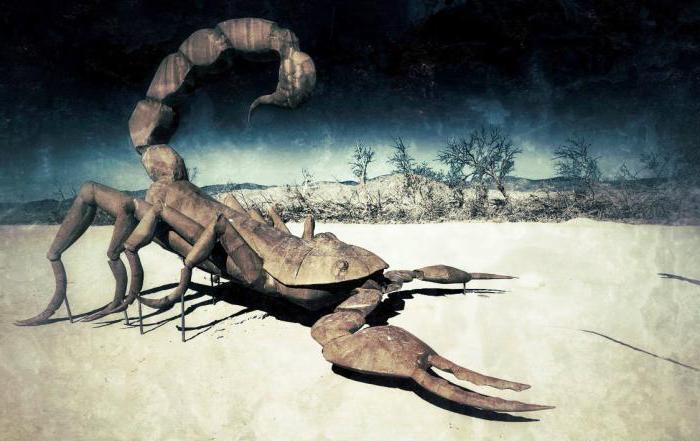 Картинки драконов и скорпионов