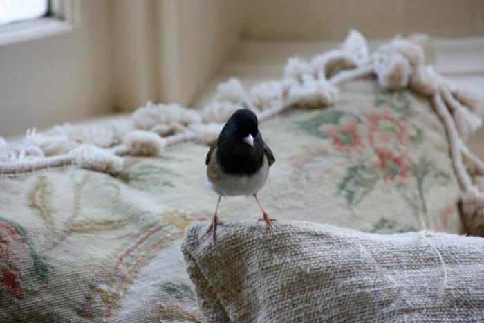 Народные приметы про птиц: о чем предупреждают пернатые посланники?