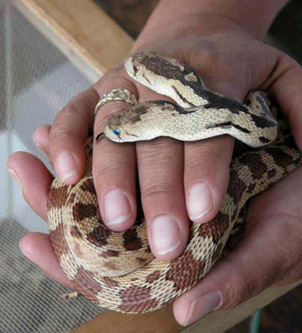приснилась змея с двумя головами