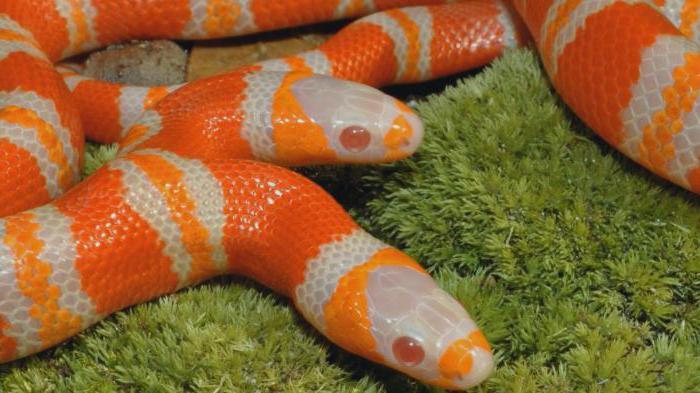к чему снится змея с двумя головами