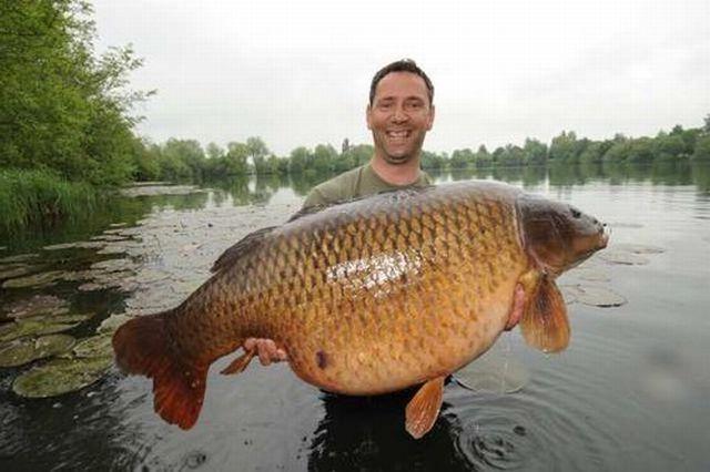Сонник большая рыба ловить