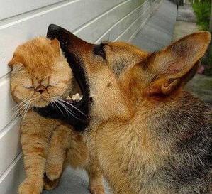 Во сне укусила собака сонник к чему снится что кусает собака