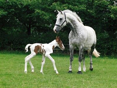 К чему женщине снится коричневая лошадь толкование по соннику