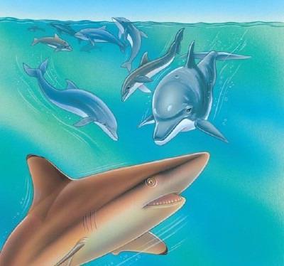 """бояÑ'ся ли акулы дельÑ""""инов"""