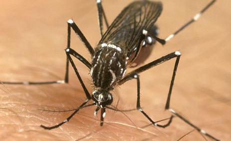 сколько ног у насекомых