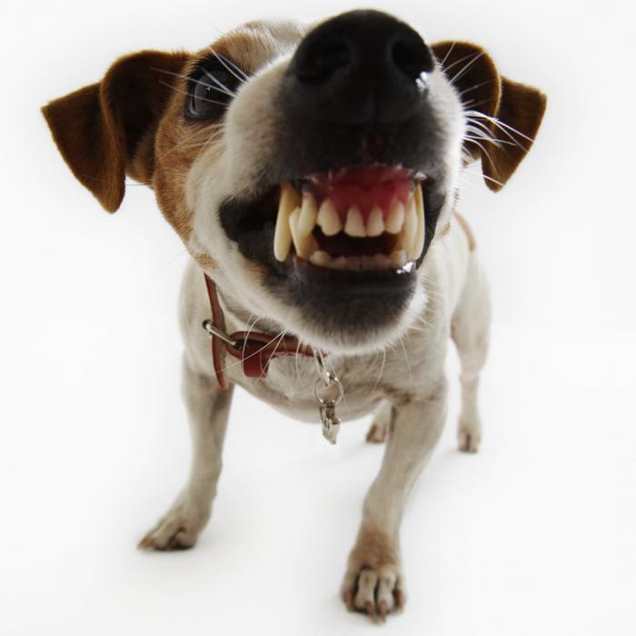 Фото Сонник злые собаки нападают