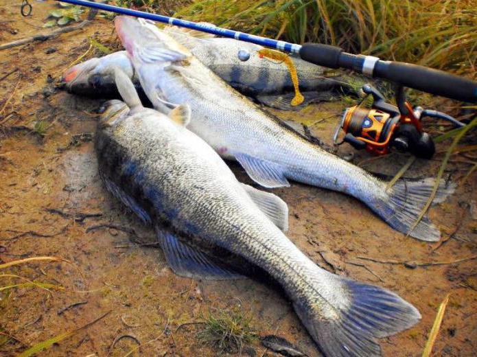 платники рыбалка в краснодаре