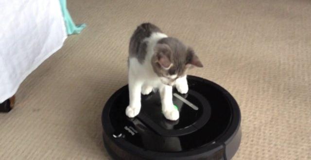 Кот катается на робот пылесосе