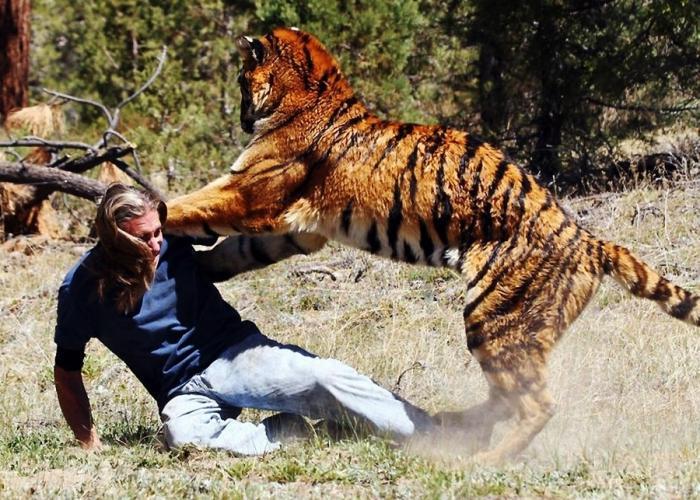 ЖЕСТЬ! Нападения животных на людей. Подборка 18+ [ч.1]